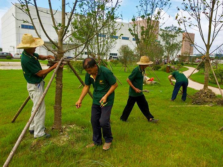 7苏州绿植租赁网在台风来临前加固树木.jpg